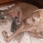 Bella and all the pups 10/13/2012