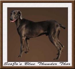 Scojos Blue Thunder Thor
